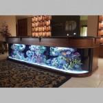 Аквариум на ресепшене в гостинице изготовлен из акрила размером 270см-50см-60см.