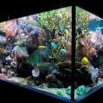 Домашний квадратный аквариум размером 100-70-100