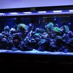 LED-aquarium-moon-light