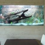 akvarium-v-interieru