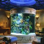 Круглый акриловый аквариум в частном доме