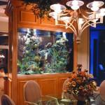 aquariums-4