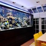 modern-aquarium-for-mansions-decorative-rooms-by-UK-aquarium-architecture